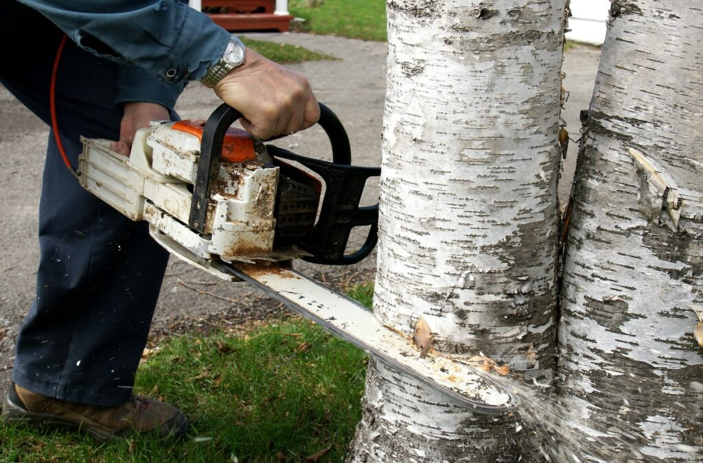 High Quality Tree Services