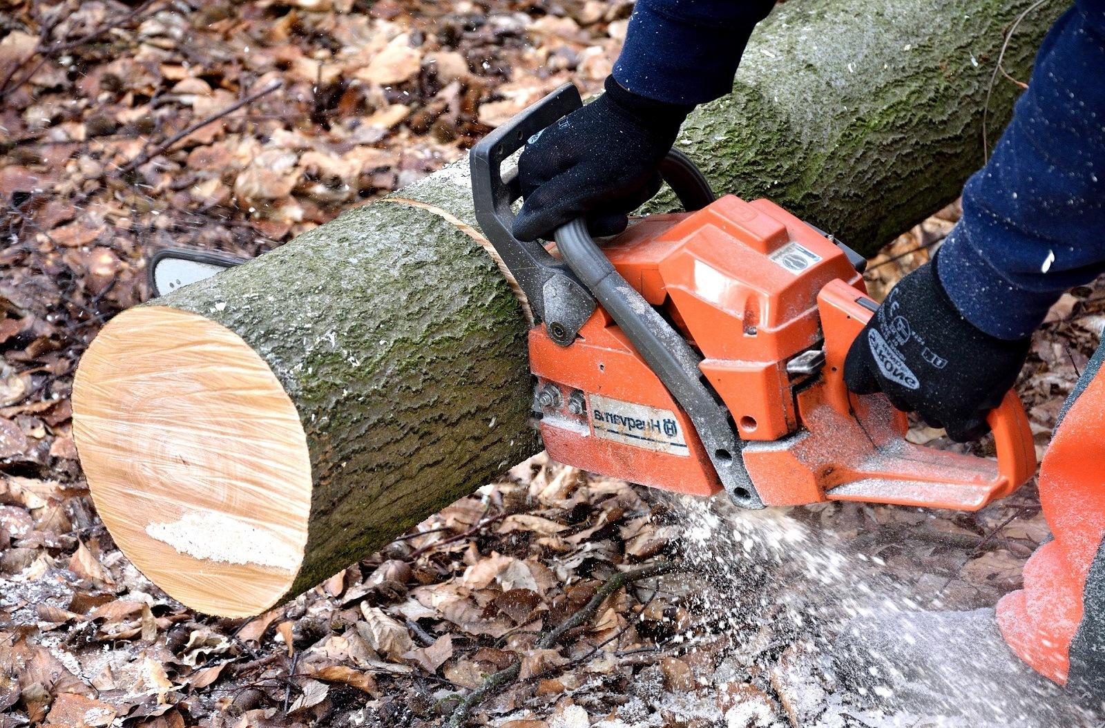 Professional Tree Lopping Company