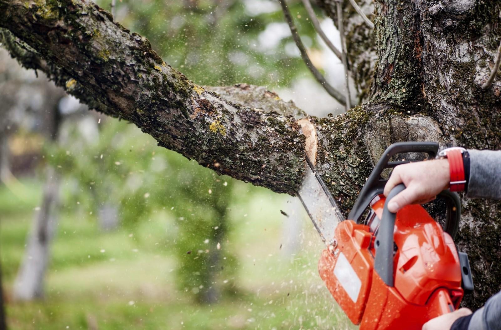 Service Arborist Tasks